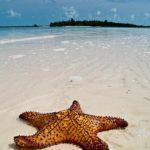 Come aprire un chiosco sulla spiaggia ai Caraibi
