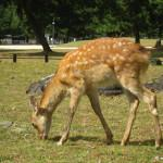Giappone: a Nara tra fiaba e realtà