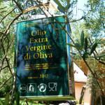 Olio novello in Umbria: itinerari consigliati