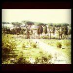 Il Roseto comunale di Roma: un'oasi di pace fuori dal tempo