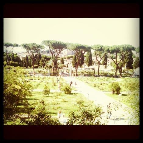 Il roseto di Roma