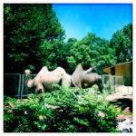 I dieci zoo e acquari da non perdere