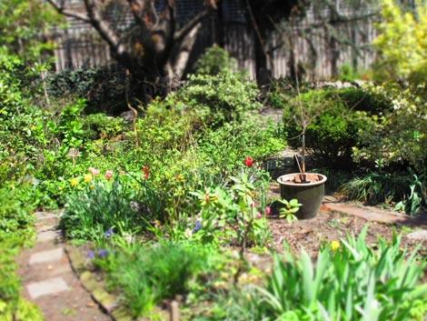 community gardens new york
