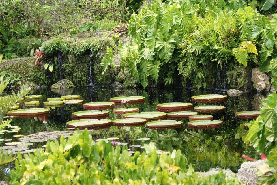 Fairchild Tropical Garden