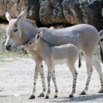 Miami per bambini tra meravigliosi parchi e giganteschi zoo