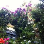Hotel Simius Playa a Villasimius: un gioiellino, peccato per le camere…