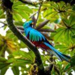 Costa Rica: visita (gratuita) e zipline nella Reserva Biologica Bosque Nuboso