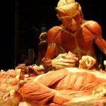 """Body Worlds"" torna a Roma dal 16 Ottobre 2014 al SET"
