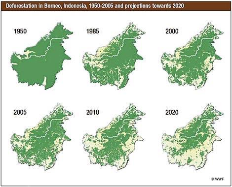 Deforestazione del Borneo