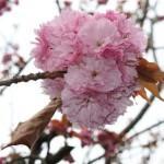 [Roma insolita] Il Giardino dell'Istituto Giapponese di Cultura
