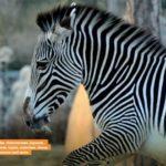[Info] Il nuovo Parco Zoologico di Parigi