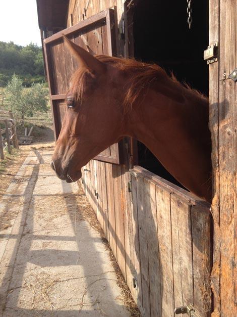 Cavalli all'agriturismo Le Novelle