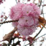 [Roma] Il giardino giapponese sempre aperto, i nuovi orari