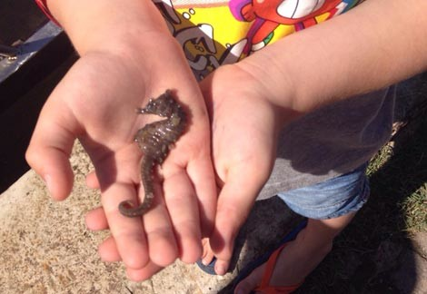 vacanze con bambini a bellaria igea marina