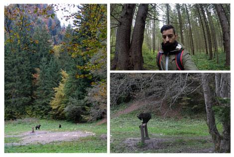 Incontro con gli orsi dei Carpaz - Weekend in Transilvania