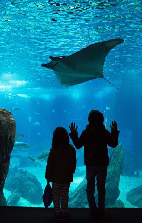 lisbona con bambini oceanario