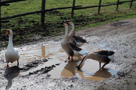 Animali in libertà al Casale sul fiume Treja