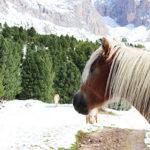 Val Gardena con bambini: Col Raiser e Rifugio Firenze