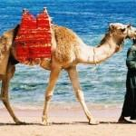 Offerta Epifania per il Mar Rosso