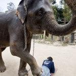 In Thailandia il massaggio lo fa l'elefante