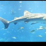San Valentino romantico davanti agli squali