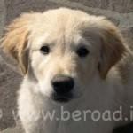Agriturismi pet-friendly