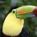 Mollo tutto e vado in Costa Rica