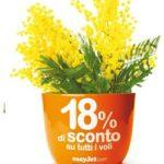 Festa della donna: easyJet regala sconti (e mimose)