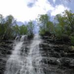 Musica nel bosco: concerti notturni immersi nella natura