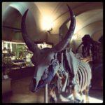 Dinosauri in carne e ossa al Museo di Storia Naturale di Firenze