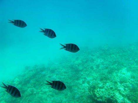 pesci mar rosso makadi discovery