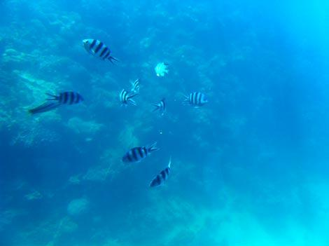 i pesci del mar rosso