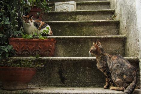 Calcata la città dei gatti