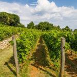 Il Carso e i vini di Beniamino Zidarich