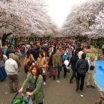 Dieci consigli semiseri per un viaggio in Giappone