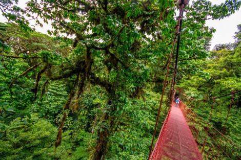 Reserva Biologica Bosque Nuboso