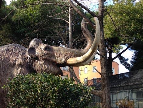 Mostra dinosauri roma