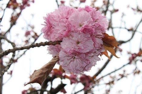 Il giardino dell'Istituto giapponese di cultura