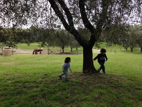 agriturismo la fattoria di pacifico