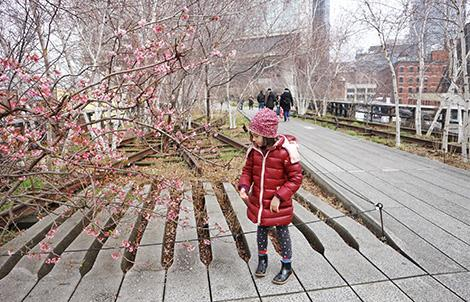 New York con bambini cosa fare: la High Line