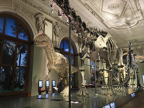 il Museo di storia naturale a Vienna