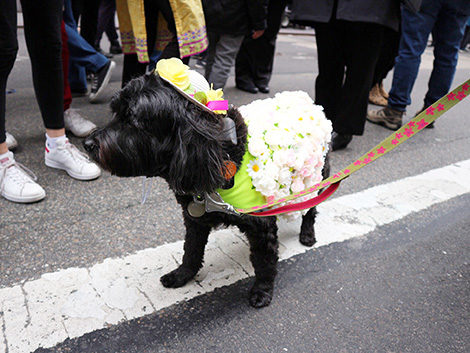 cagnolino alla Easter Bonnet Parade New York